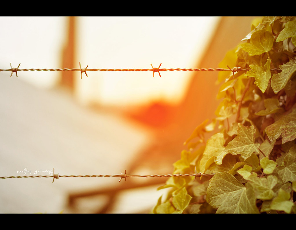 Project 365, Day 323, 323/365, Bokeh, sunset, happyfencefriday, hff, happy fence friday, fence, leaves, leaf, rooftop, Sigma 50mm F1.4 EX DG HSM, 50mm, 50 mm,