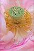 Pink Lotus Flower -IMG_8191 (Bahman Farzad) Tags: pink flower macro yoga peace lotus relaxing peaceful meditation therapy lotusflower lotuspetal lotuspetals lotusflowerpetals stunningphotogpin lotusflowerpetal