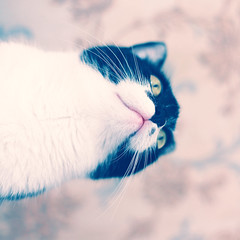 From a different angle (ital_vita) Tags: pink red wild portrait blackandwhite cats white black color cute eye ar
