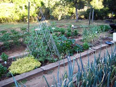 Another view of the July garden