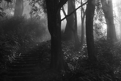 staircase in the foggy wood (LOLO Italiana) Tags: sanfrancisco ca blackandwhite nature misty fog forest sunrise landscape woods staircase mountdavidson mistywoods spookyforest eerieforest