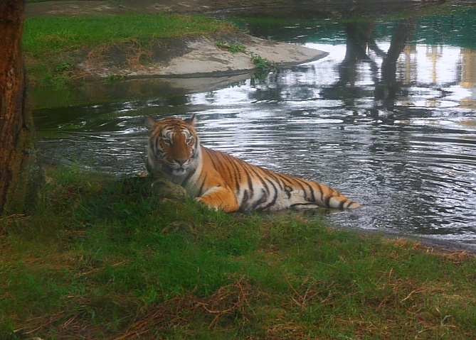 六福村動物園030