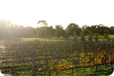 le vines