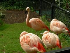 zoo nc asheboro