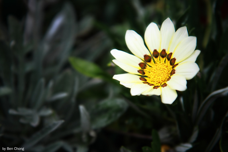 Putrajaya Flower & Garden Festival 2011