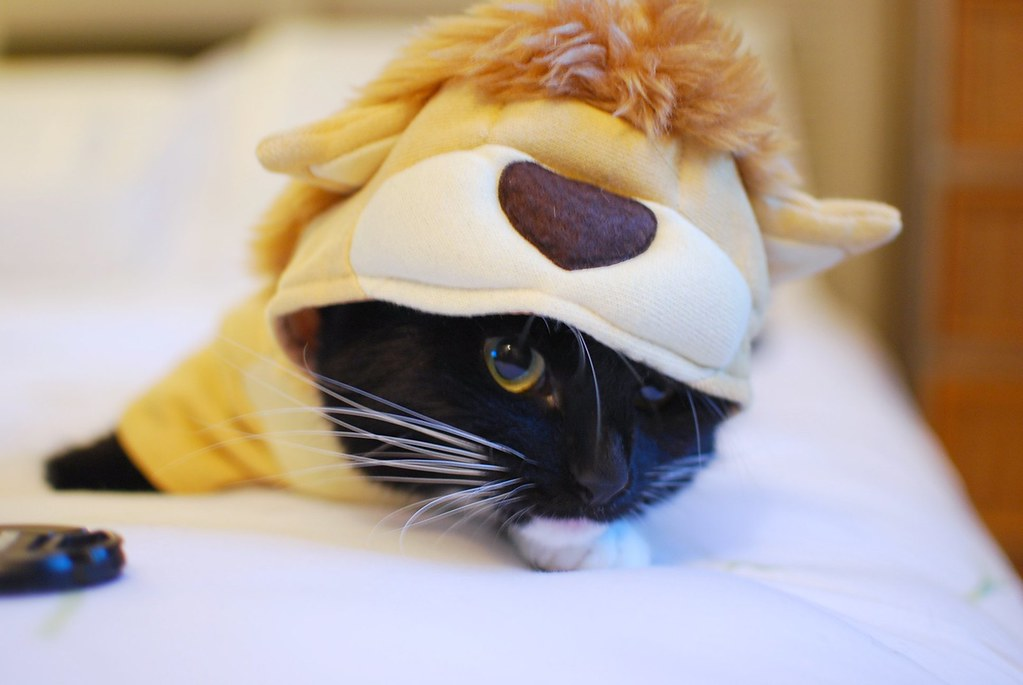 chloe cat tiger costume