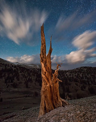 requiem for a tree... (Mac Danzig Photography) Tags: california tree pine night forest stars landscape ancient long exposure bristlecone thesecretlifeoftrees