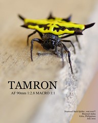3 (Rhannel Alaba) Tags: city macro spider back nikon philippines 11 diamond cebu af tamron 90mm 128 d90 pido alaba rhannel