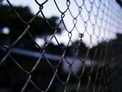 city fence (weizor) Tags: sf sanfrancisco california ca trees usa america fence lumix bokeh decay panasonic bayarea micro43 microfourthirds dmcg3