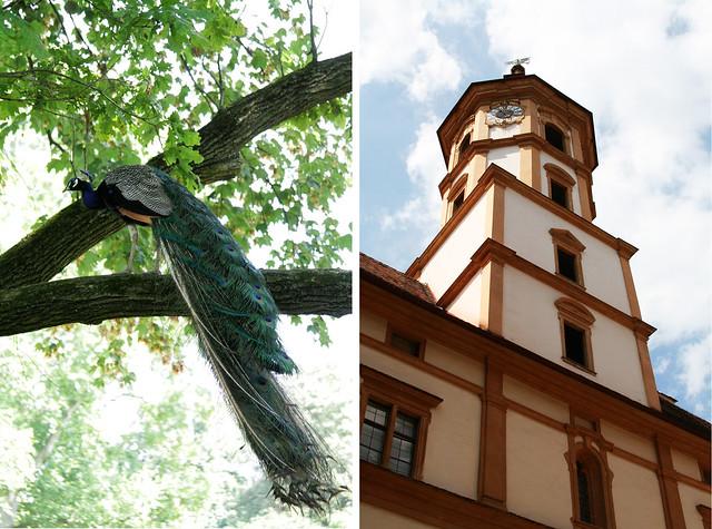 Scholl Edenberg