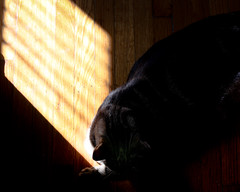 (Tom LeGro) Tags: shadow cat canon eos mark ii 5d mm 50