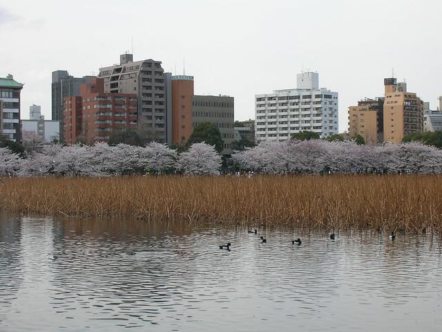 d7-15-ueno-park