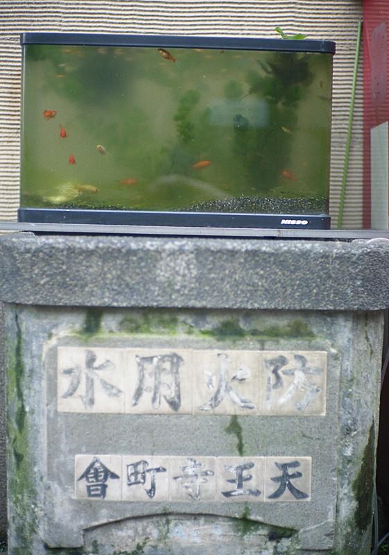 防火水槽と金魚