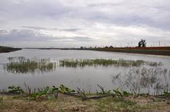 台南大學七股校區位於漁塭區,佔地120公頃,經過4次環評有條件放行,校地規劃了壯觀的滯洪池。圖片:陳香蘭/攝