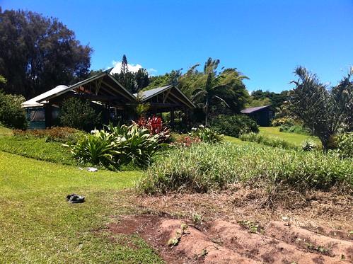 Hawi property