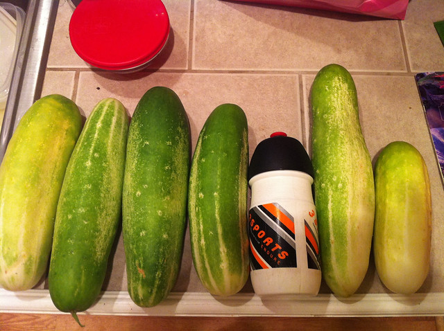 oops.  forgot to pick cukes for a couple days...