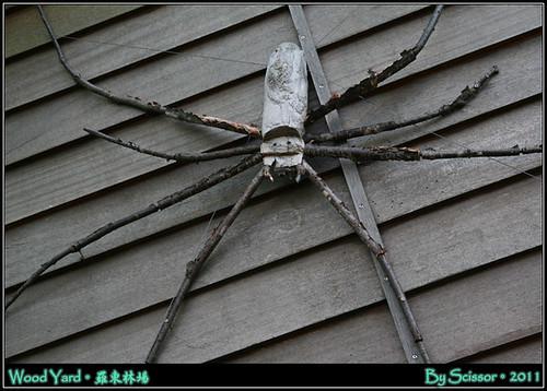 木質大蜘蛛