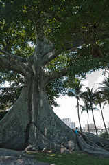 Tree of Life (Matt Arabas) Tags: west beach westpalmbeach fl flagler treeoflife