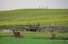 Howmore Bridge & Deer (DonaldUist) Tags: summer house water car south deer sri astra uist howmore locheynort bornish