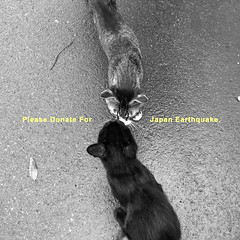 Please Donate For Japan Earthquake. (SOVA5) Tags: street japan cat square earthquake ricoh donate grd grdigital2