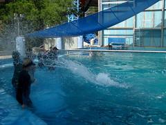 IMG_5061 (dolphingirl0609) Tags: world sea camp san texas dolphin lion seal killer whale orca beluga antonio advanced career