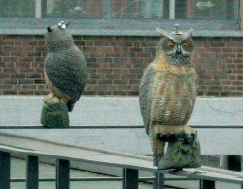 Owls at Wembley Park station