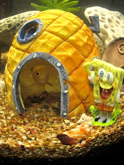 sea pet fish tank under pineapple spongebob spongebobsquarepants squarepants