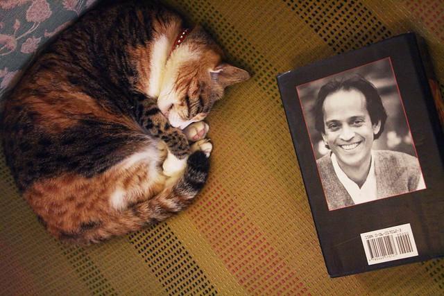 Vikram's Cat