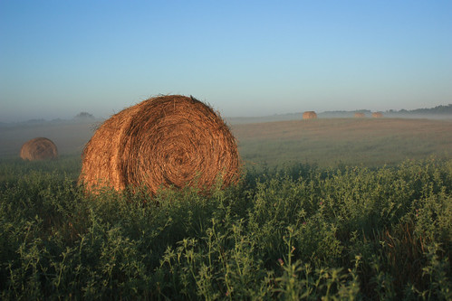 hay bale on a misty August morning