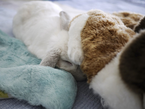 3,still sleepy...