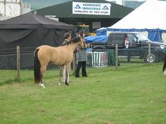 IMG_1295, Horses (ronnie.cameron2009) Tags: horses scotland scottish scottishhighlands rossshire muiroford highlandsofscotland rosscromarty blackisleshow mannsfield scottishhighlandsofscotland