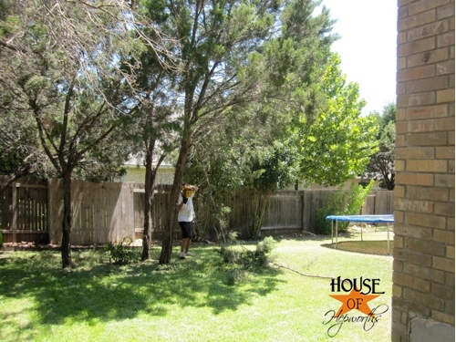 yard_work_tree_cutting_10