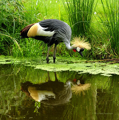 Looking in the mirror........... (frankcorn) Tags: nature birds fauna nikon dslr wow1 wow2 wow3 wow4 wow5 d700 friendoffriends blinkagain dblringexcellence tplringexcellence bestofblinkwinners blinkagainsuperstars eltringexcellence