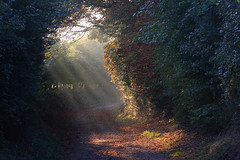 Sunlit path (Paul - Herts) Tags: morning misty sunrise dawn heaven hertfordshire herts britishcountryside earlyriser morningglow heartwood sandridge sigma70300mmapomacro canon40d