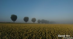 Auvers sur Oise, France - Misty Morning (GlobeTrotter 2000) Tags: morning panorama mist france nature field misty landscape gold europe sur auvers oise