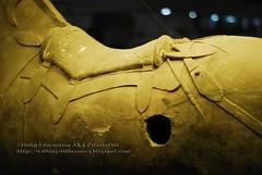 Cavalry Horse