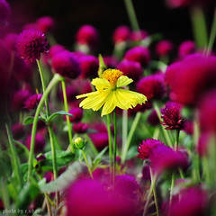 lonely flower (e.nhan) Tags: life pink flowers light red flower green art closeup colorful colours dof bokeh backlighting enhan