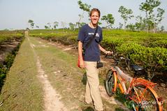 Riding Bikes Through Tea Estates Outside Srimongal, Bangladesh (uncorneredmarket) Tags: people tea bangladesh teagardens teaestates manuallabor srimongal teaplantations ruralbangladesh teapickers sylhetdivision sreemangal