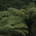 ... o Koru se destaca nas florestas da NZ