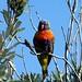 Existem aves de todos os tipos e cores...