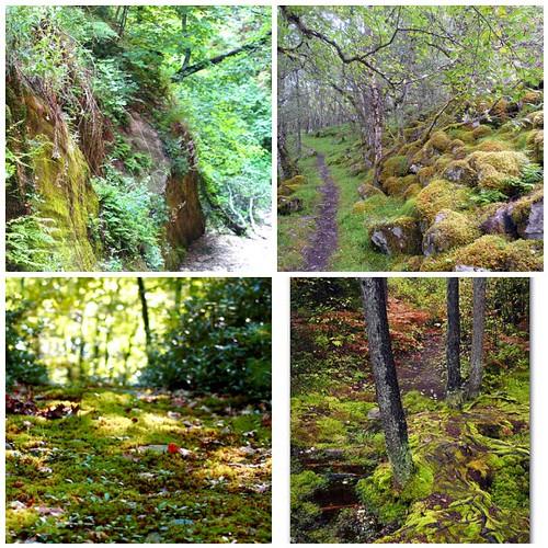 Mossy Path Inspiration