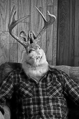 jack (ethanklenk) Tags: rabbit bunny jack hare head ethan antlers jackelope klenk