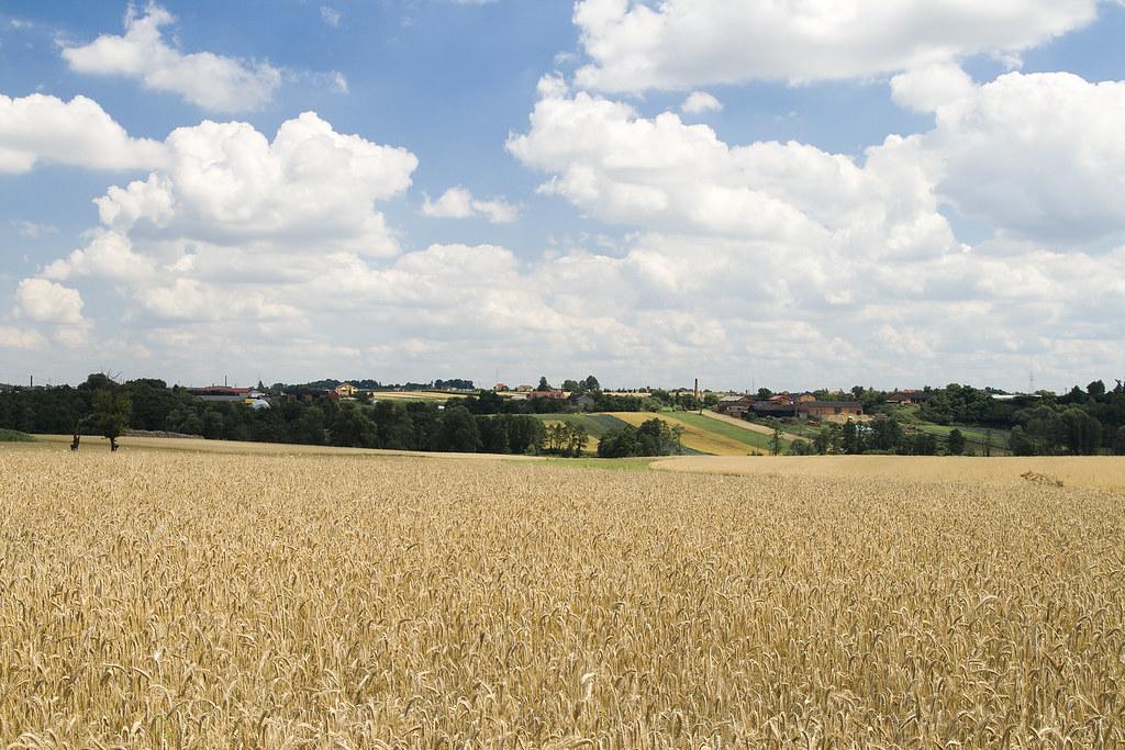 Near Kalisz / Poland