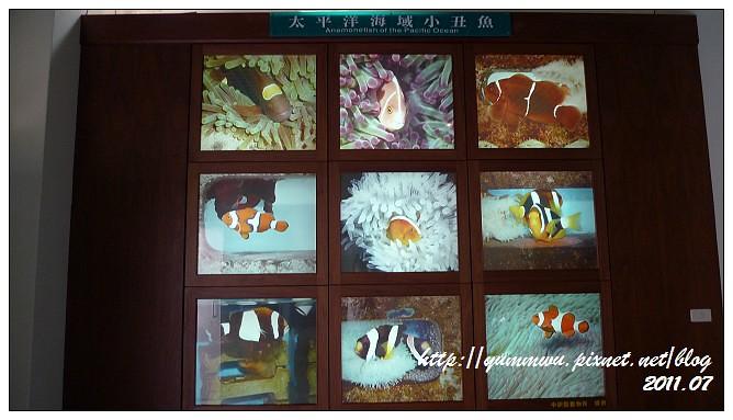 110711小丑魚主題館 (21)