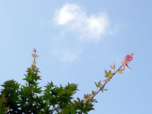 今朝の空とモミジ
