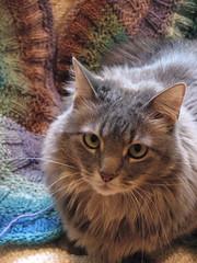 Teddy (snap713) Tags: scarf teddy knit craft kitties