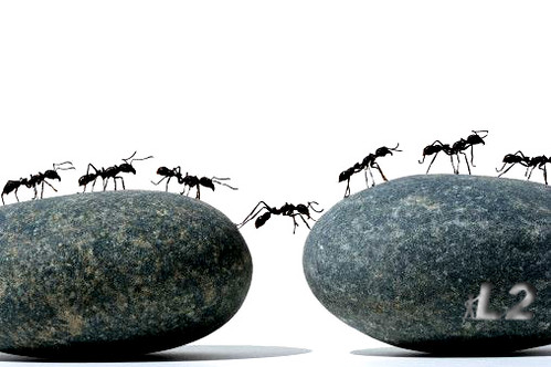 ant of rocks