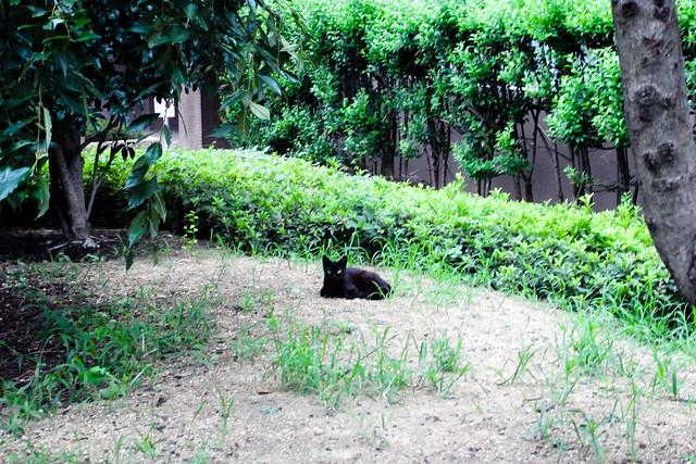Today's Cat@2011-07-21