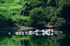 PhoTones Works #467 (TAKUMA KIMURA) Tags: trees reflection water forest river rocks   kimura ep3    takuma     photones g100300