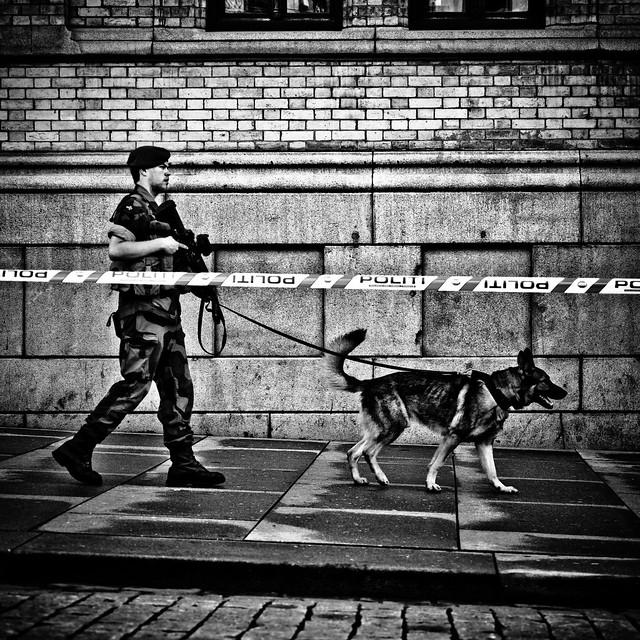 Military patrol dog